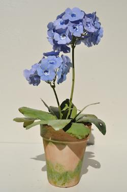 double stemmed auricula